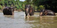 Tangkahan, Sumatra