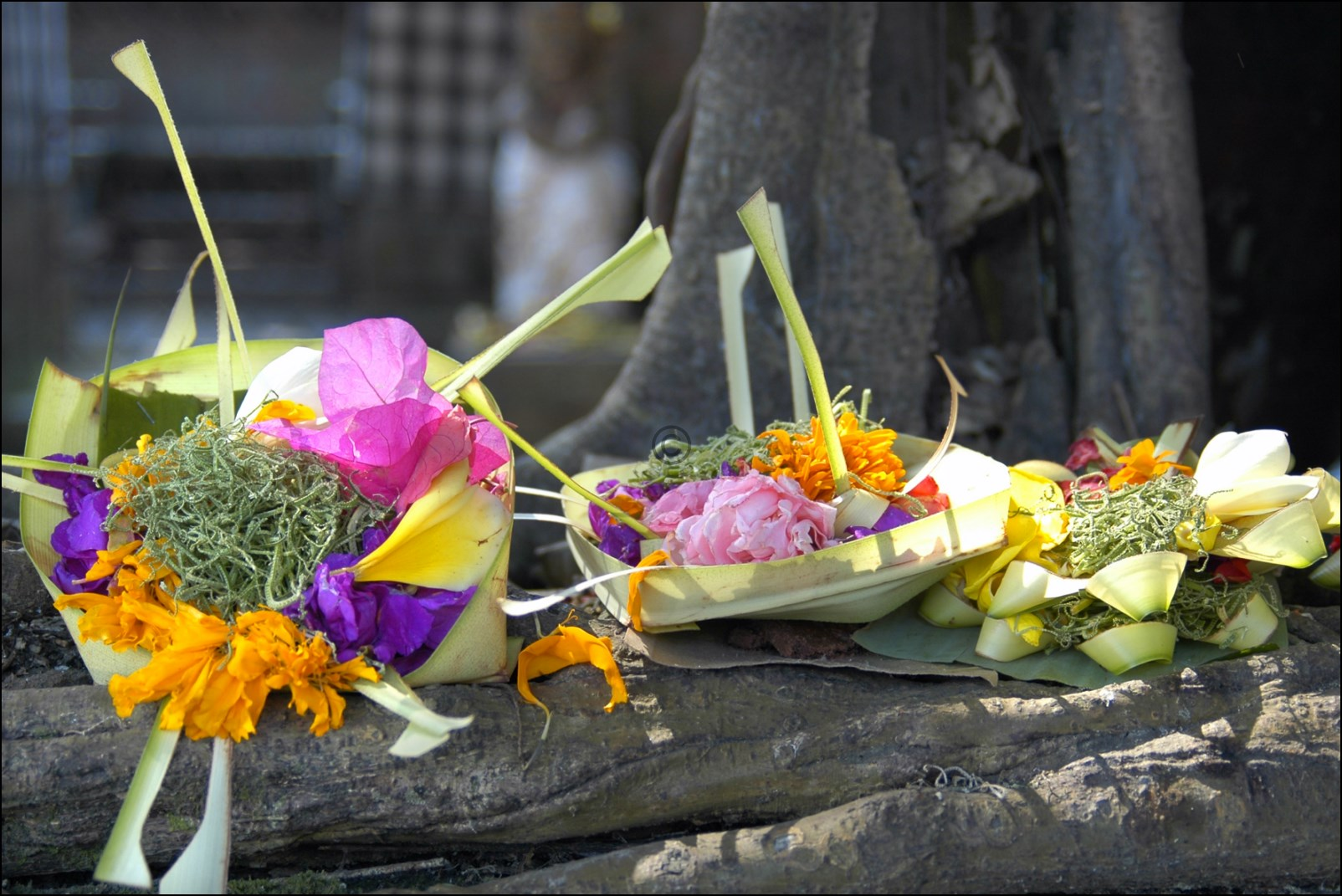 Bali 2012-14