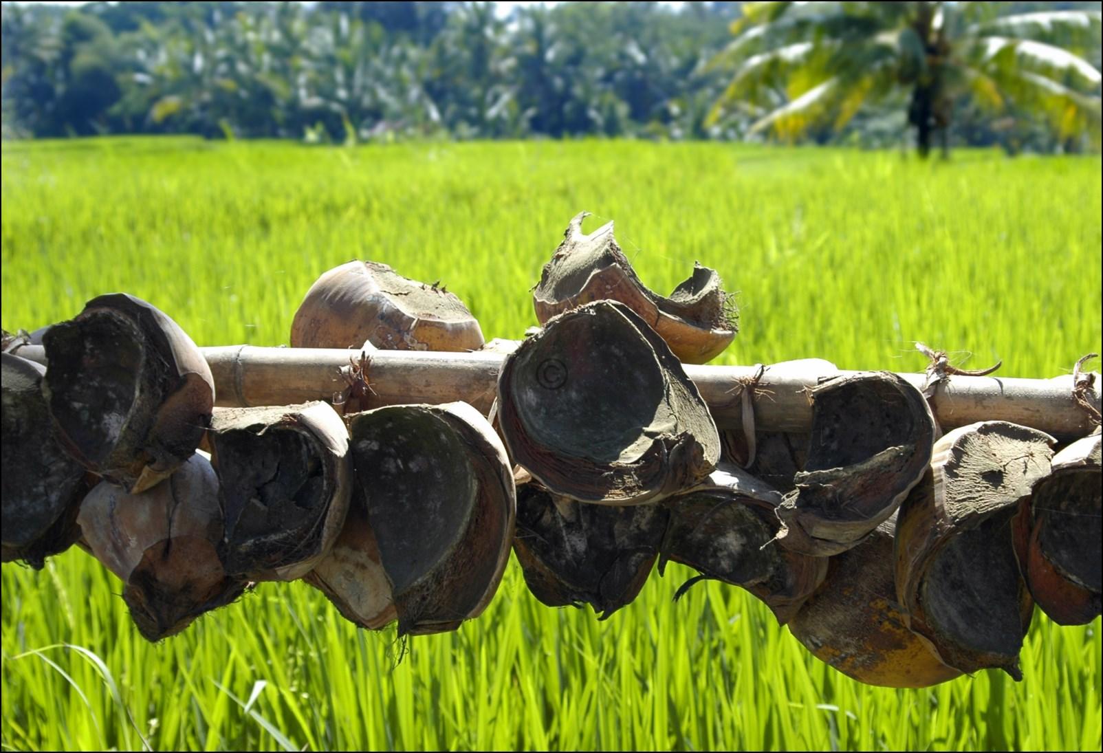 Bali 2012-15