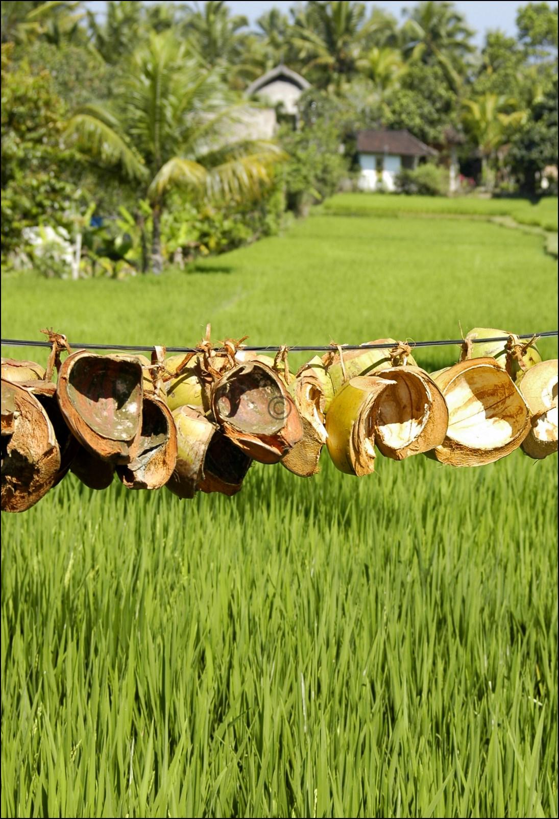 Bali 2012-16
