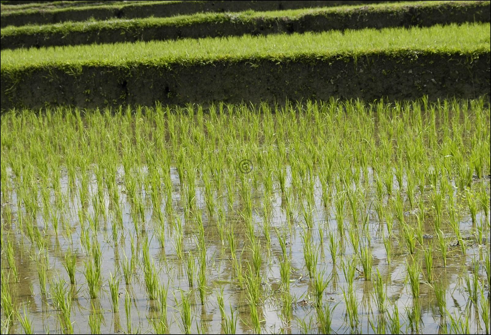 Bali 2012-23