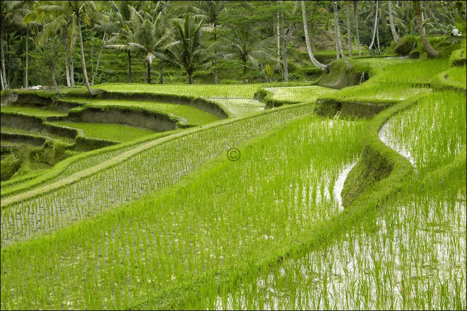 Bali 2012-36