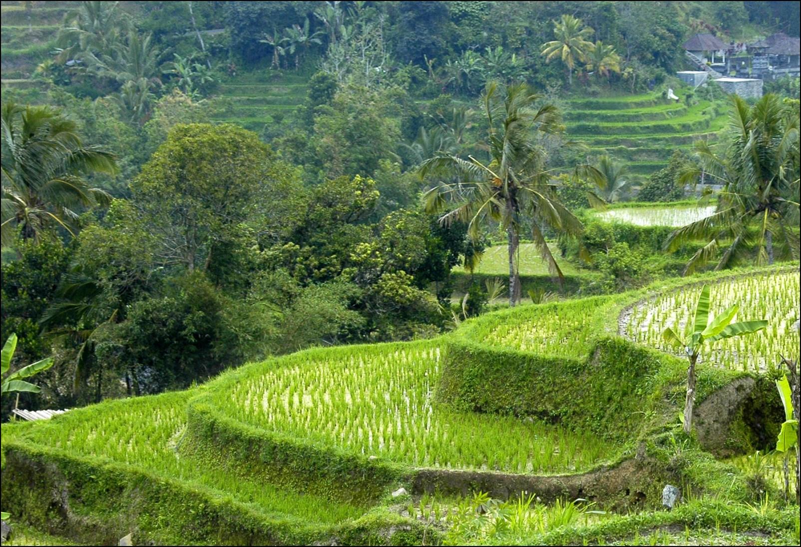 Bali 2012-38