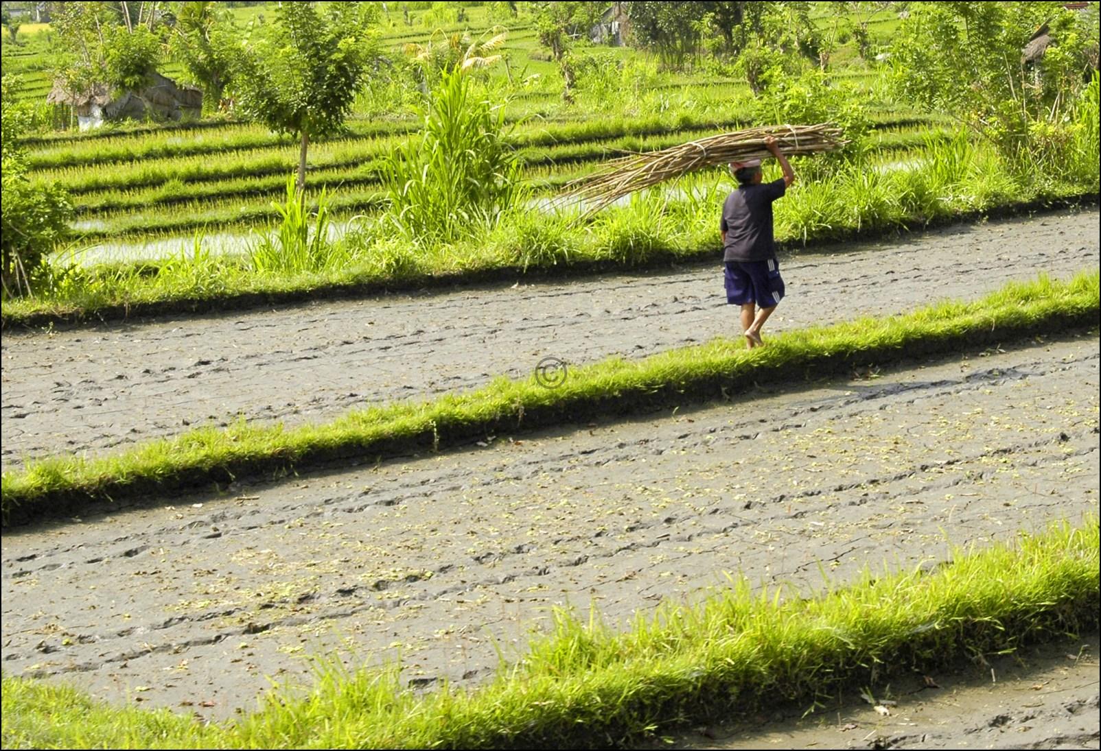 Bali 2012-48