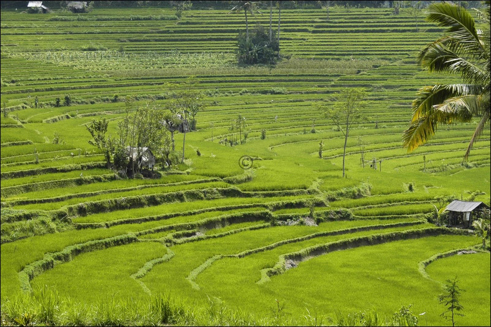 Bali 2012-54