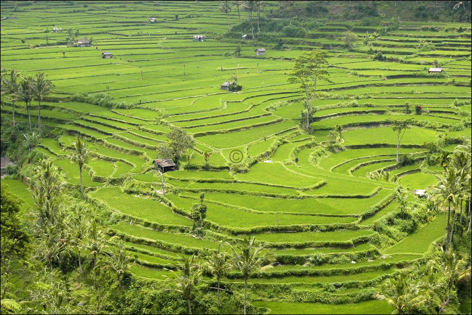 Bali 2012-56