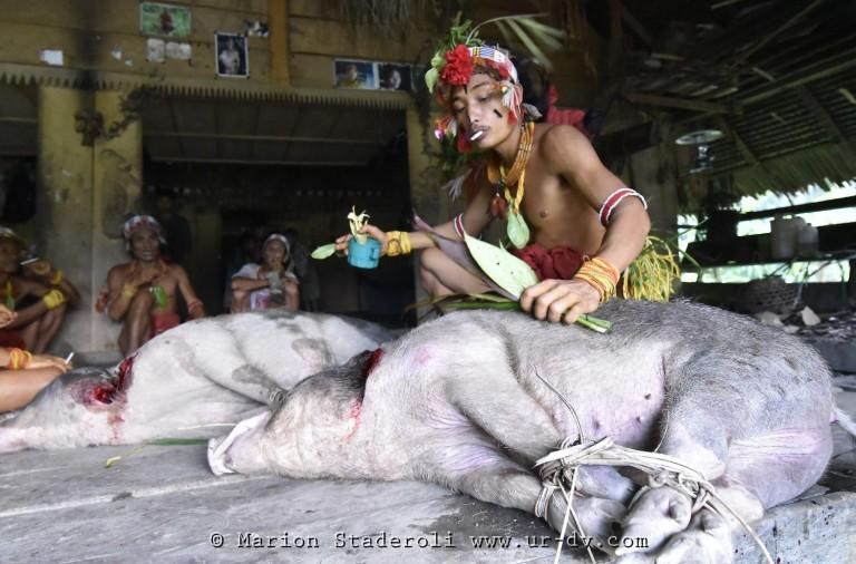 Mentawai. M. Staderoli47.web