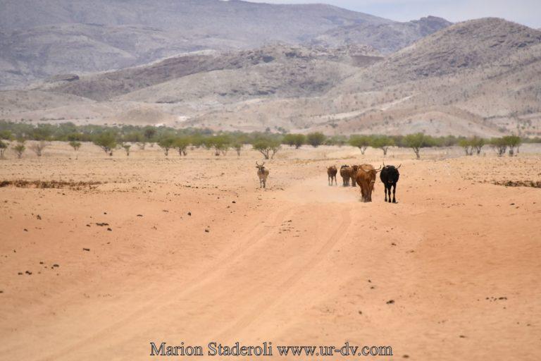 Namibie-114