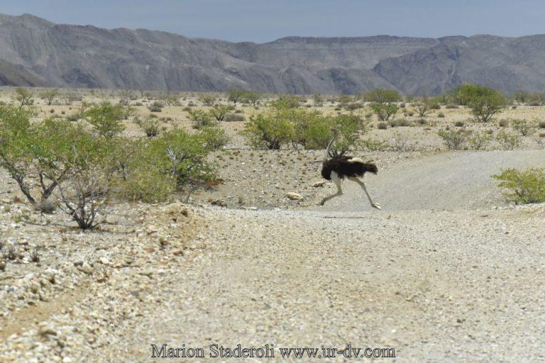 Namibie-112