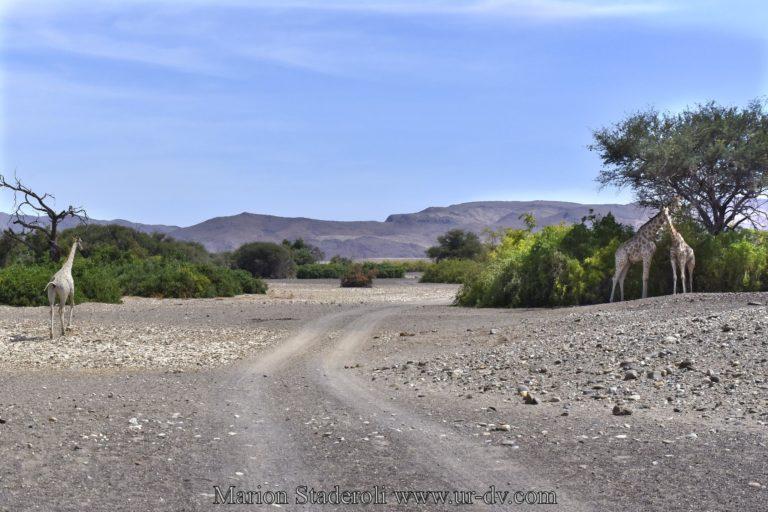 Namibie-111
