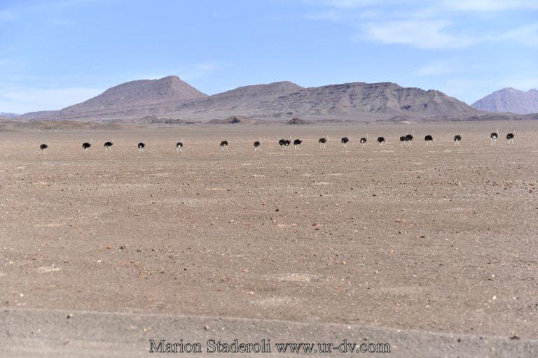 Namibie-102