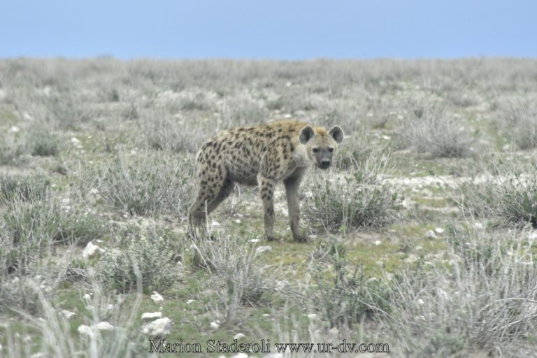 Namibie-39